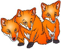 Three Foxes Stock Image