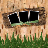 Three frame. With ribbons and bow to birchen bark Royalty Free Stock Image