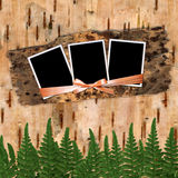 Three frame. With ribbons and bow to birchen bark Royalty Free Stock Images