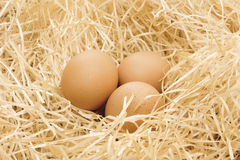 Three free range eggs Stock Images