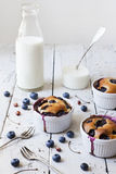 Three french clafoutis with blueberries and cherries on ceramic ramekins on rustic white vintage background with milk glass bottle Royalty Free Stock Image