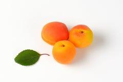 Three fresh apricots Stock Photography