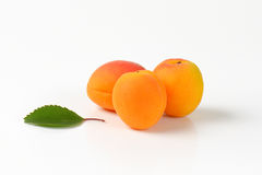 Three fresh apricots Royalty Free Stock Images