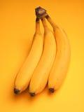 Three fresh bananas Stock Image