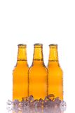 Three fresh beers with ice royalty free stock image