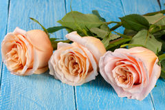 Three fresh beige roses on a blue wooden background Royalty Free Stock Photo