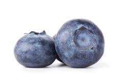 Three fresh blueberries Stock Photo