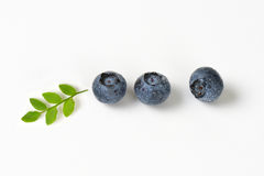 Three fresh blueberries Royalty Free Stock Images