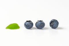 Three fresh blueberries Royalty Free Stock Image