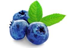Three fresh blueberry Stock Images