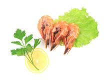 Three fresh boiled shrimps. Royalty Free Stock Images