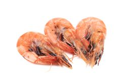 Three fresh boiled shrimps. Royalty Free Stock Photos