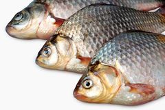 Three fresh carp Royalty Free Stock Images