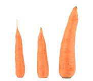 Three fresh carrots. Royalty Free Stock Photo
