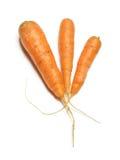 Three fresh carrots Stock Image