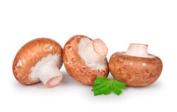 Three fresh champignons with parsley Royalty Free Stock Images