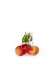 Three fresh cherries Stock Image