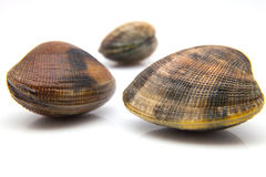 Three fresh clams Stock Photo