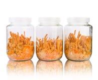 Three fresh Cordyceps in glass bottles Stock Photography