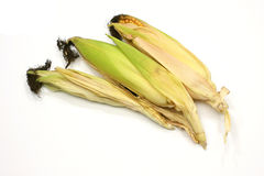 Three fresh corn cobs. With green leaves Stock Images