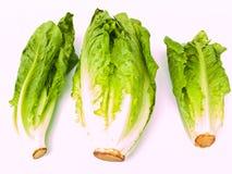 Three fresh cos salad isolated on white. Background Royalty Free Stock Photo