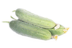 Three fresh cucumber Royalty Free Stock Photos