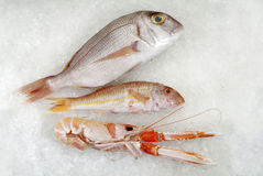 Three fresh fish on ice Royalty Free Stock Images