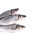 Three fresh fish. Royalty Free Stock Images