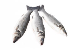Three fresh fish on a light background. With space for text Stock Photos