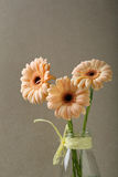 Three fresh flowers in glass vase stock image