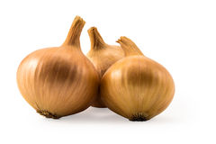 Three fresh gold onions isolated on white Stock Photos