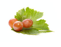 Three fresh grapes berries on the green leaf Royalty Free Stock Photo
