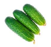 Three fresh green cucumbers isolated on white background. Studio Photo Royalty Free Stock Photos