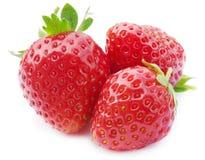 Three fresh, juicy and healthy strawberries Stock Photos