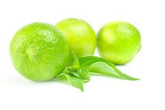Three fresh limes Isolated on white background with leaves.  Royalty Free Stock Photography