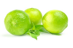 Three fresh limes with leaves Isolated on white.  Stock Images