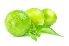 Three fresh limes in line Isolated on white with leaves.  Royalty Free Stock Photography