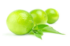 Three fresh limes in row Isolated on white with leaves. Three fresh limes in row Isolated on whitewith leaves Stock Images