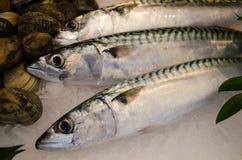 Three Fresh Mackerel Royalty Free Stock Image