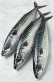 Three fresh mackerels Stock Photos