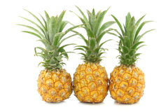 Three fresh mini pineapple fruits Stock Photo