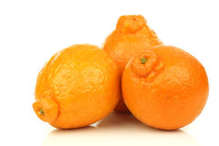 Three fresh minneola's Royalty Free Stock Photo