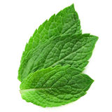 Three fresh mint leaves Stock Photography
