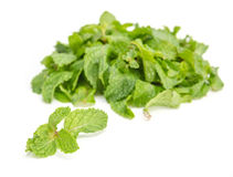 Three fresh mint leaves isolated on white background. Studio mac royalty free stock images