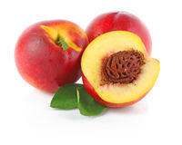 Three fresh nectarines Stock Image