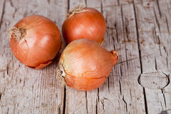 Three fresh onions Royalty Free Stock Image
