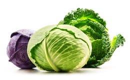 Three fresh organic cabbage heads isolated on white Stock Photo