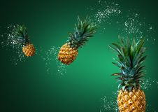 Fresh Pineapples Floating on Green Background. Three of fresh pineapples floating on green background royalty free stock images