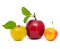 Three fresh plums  with leafs Royalty Free Stock Photography