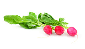 Three fresh radishes. Isolated on white background Royalty Free Stock Photography